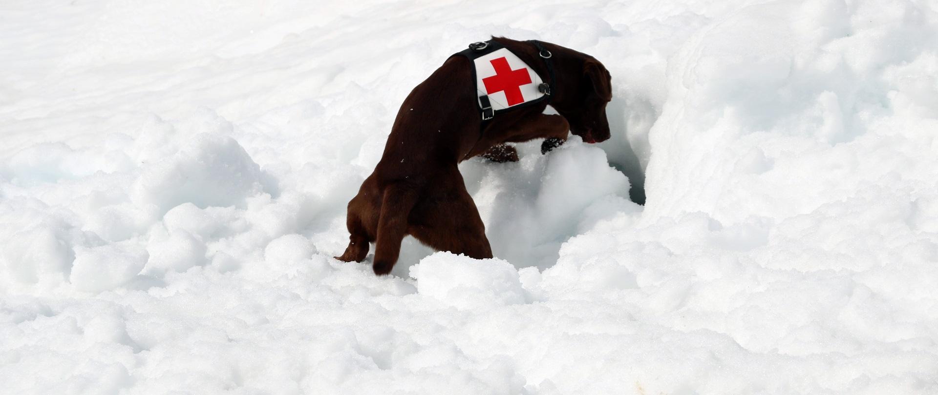 Fachkurs<br> Lawinenhund 19