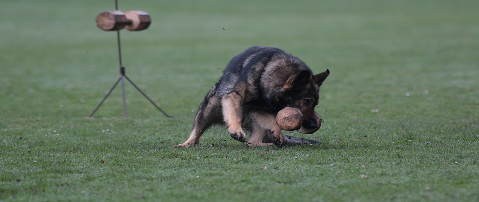 Fachkurs Sporthund